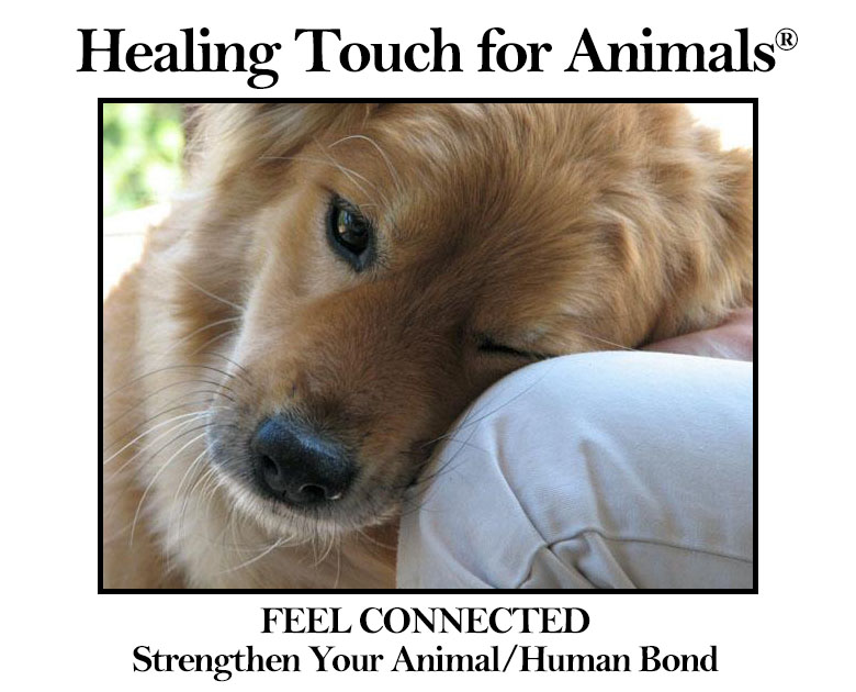 Healing Touch For Animals