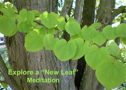 "Explore a ""New Leaf"""